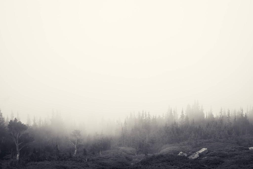 Foggy_Forest_by_Jake_Stewart